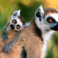 wildlife edition! madagascar: meet the locals