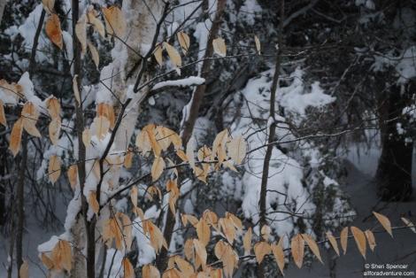 snowfun_201302_0470_900C
